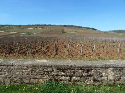 burgund (3)